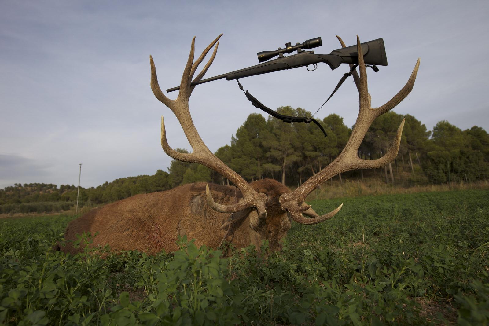 combo&promo_big game hunting spain