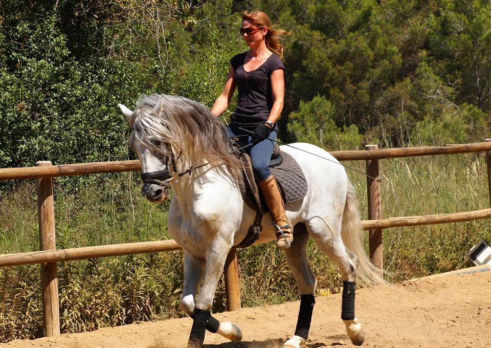 horseback_ibex